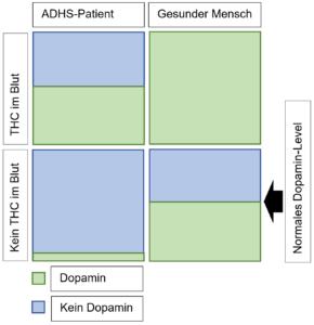 Dopamin-Level bei ADHS-Patienten und gesunden Menschen