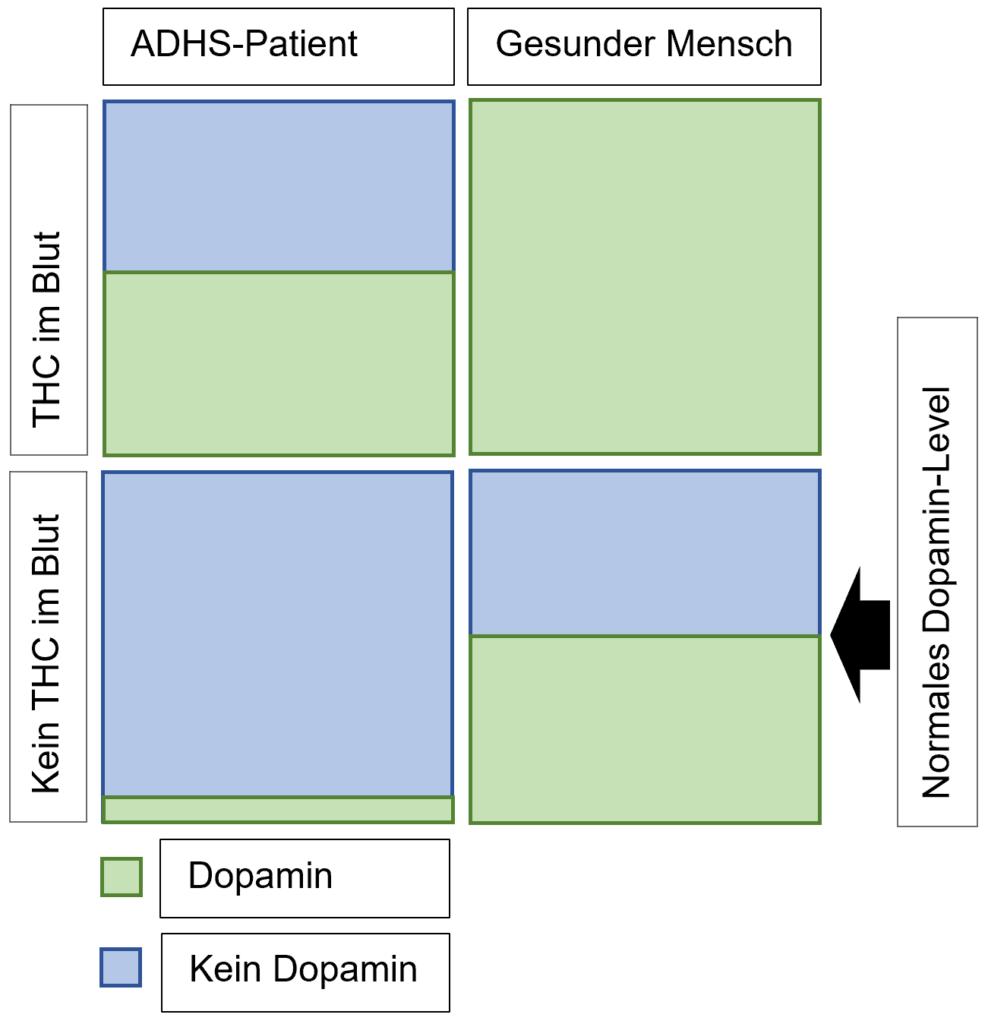 Dopamin-Level bei ADHS-Patienten und gesunden Menschen. cannabis und adhs