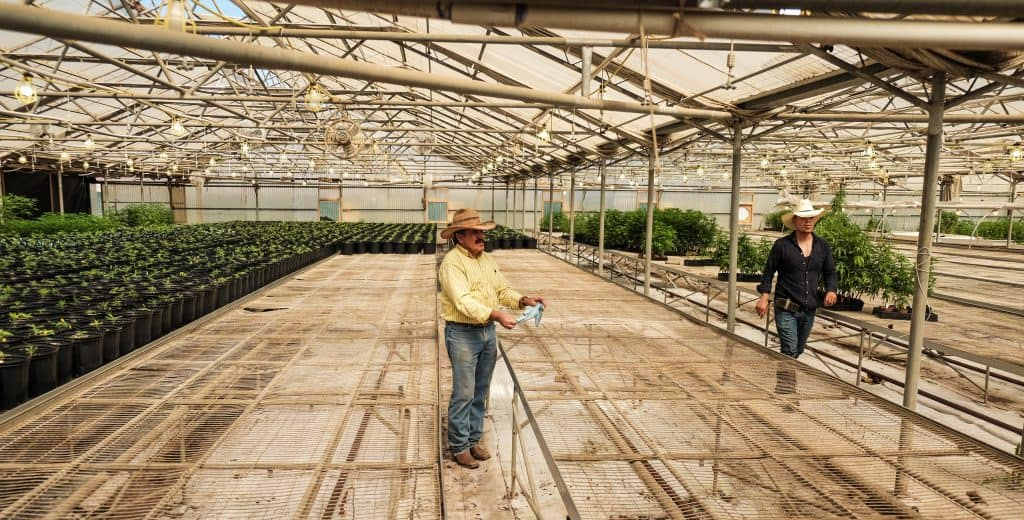 Cannabis Farm Workers