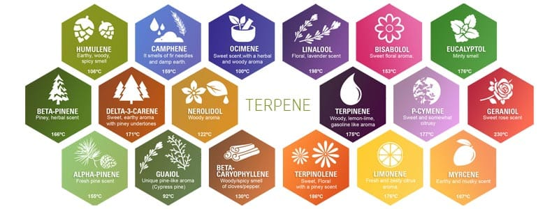 Auflistung verschiedener Terpene, ihrer Verdampfungstemperatur und Geruchsentfaltung welche auch in Wasser-Hasch enthalten sind