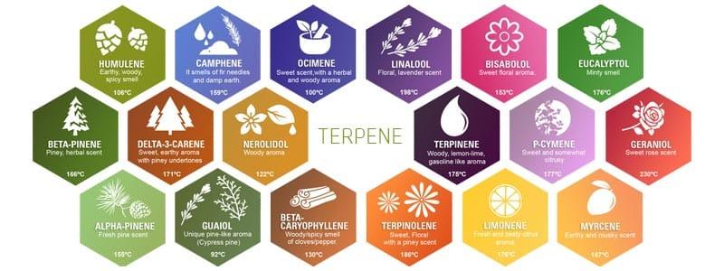 Terpene List with described scents
