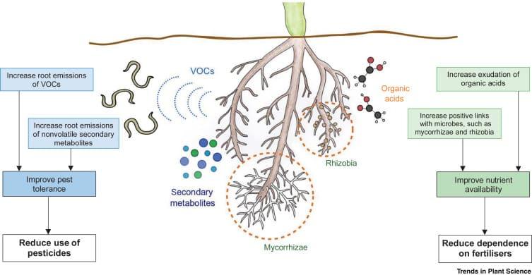 Symbiose Pflanze/Bodenorganismen