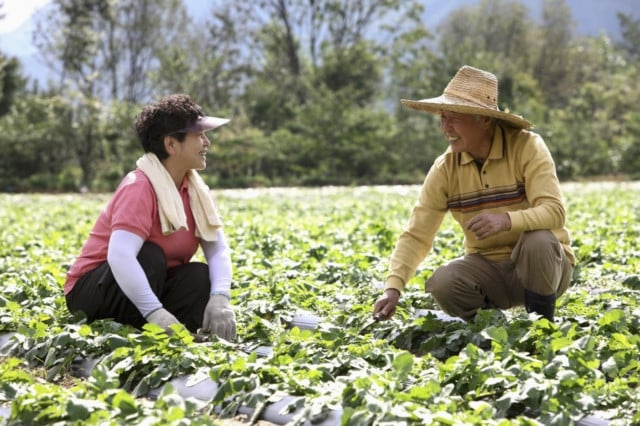 Koreanische Farmer auf Salatfeld