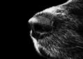 CBD für Hunde ohne Placebo Effect
